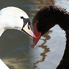 white swan black swan by Robert Deaton
