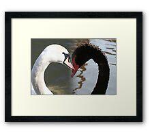 white swan black swan Framed Print