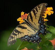 Spreading my Wings by Dennis Rubin IPA