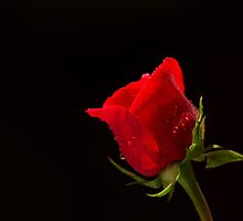 One Love by Betty MacRae