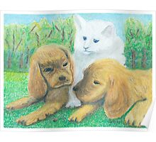 What is it? 2 Puppies and a Kitty watching a Daddy Long Leg  Poster