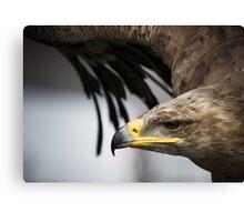Target Locked - Eagle eye Canvas Print