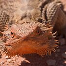 Central Bearded Dragon by Blue Gum Pictures