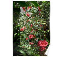 Rainforest Montage Poster