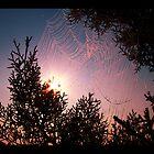 Web Sight by ZenAkita