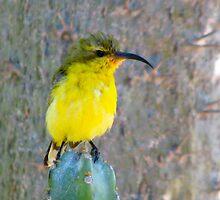 """Beaky Bill"" by Sue  Fellows"