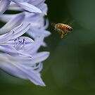 Busy Little Bee  by tess1731