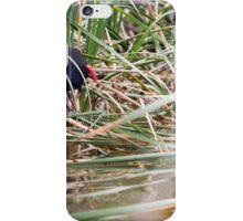 Purple Swamphen iPhone Case/Skin