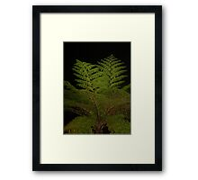 Fern in the Night Framed Print