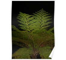Fern in the Night Poster
