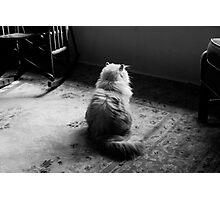 Silver Cat Curiosity Photographic Print