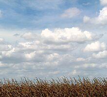 Cow Corn by Glenna Walker