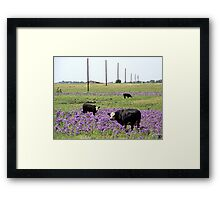 Cows in the Hood Framed Print