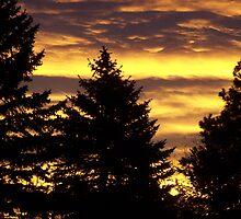 Thanksgiving sunrise by Lori  Wilson