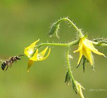 Pollen Seeker by ChereeCheree