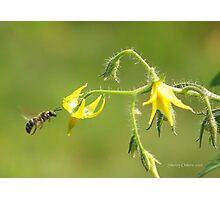 Pollen Seeker Photographic Print