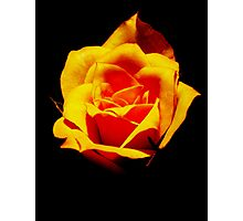 Rose of Death Photographic Print