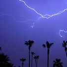 Palms Trees and a Lightning Thunder Storm by Bo Insogna