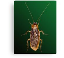 Cockroach Bedazzled Canvas Print
