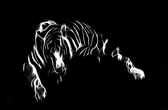 Line`s Of The Tiger by JohnDSmith