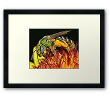 Pollen Party Pooper ! Framed Print