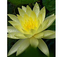 Lilly shinning  Photographic Print