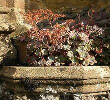 Sherborne Wall Niche by lezvee