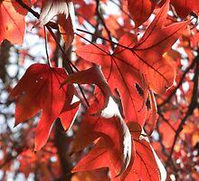 Orange U Glad For Leaves? by Navigator