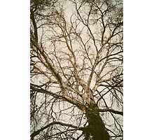 Roots to the Sky Photographic Print