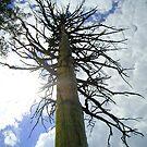 Tree of Life by CXCBEAR