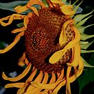 whimsical sunflower by Sheila McCrea