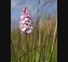 Spotted Orchid,  Portnoo, Co. Donegal T-Shirt