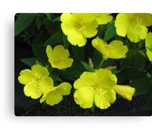 Yellow Flowers #4 Canvas Print