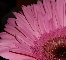 Pink by JasmineCate