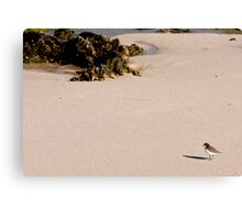 Lonely on Beach Canvas Print