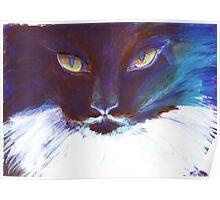 Feline Stare Poster