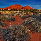 """ Desert Lights "" by CanyonWind"