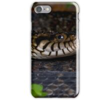 Florida Banded water Snake iPhone Case/Skin