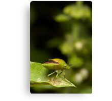 Green Bug Canvas Print