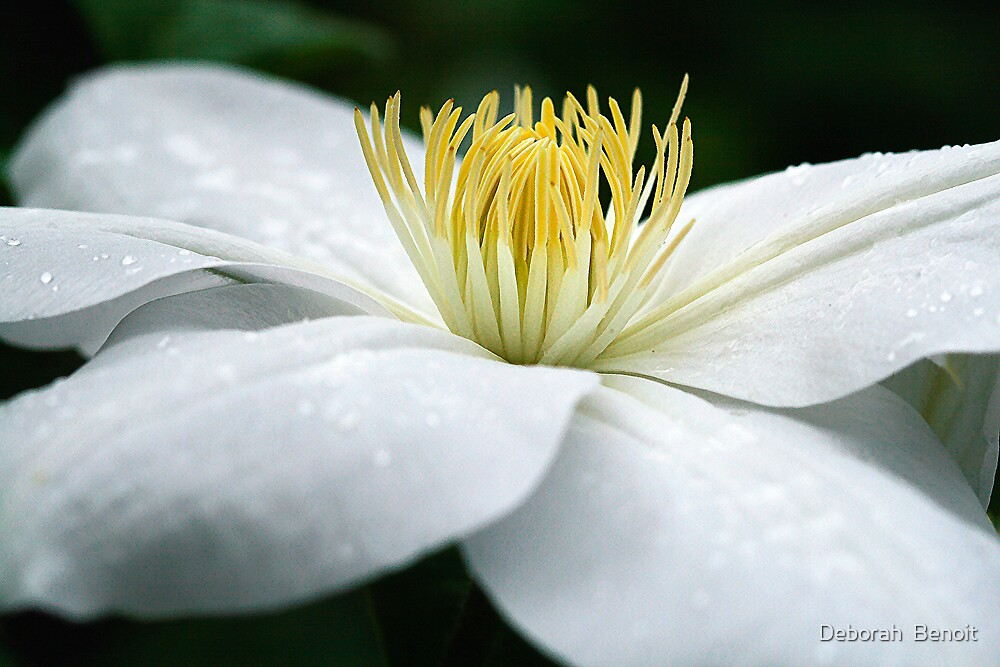 White And Pure by Deborah  Benoit