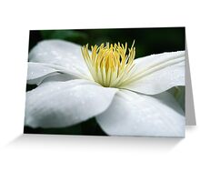 White And Pure Greeting Card