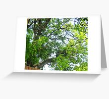 Leaves and Branches Greeting Card