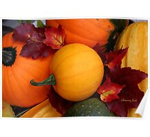 Pumpkins, Gourds and Maple Leaves Poster