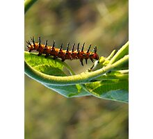 Spike the Caterpiller Photographic Print