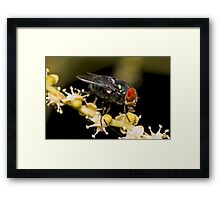 Bluebottle Fly on Palm Flower Framed Print