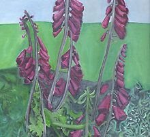 Foxgloves At Hendra by Rebecca Mason