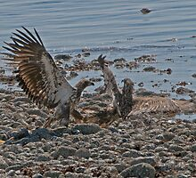 Fight on the Beach by David Friederich