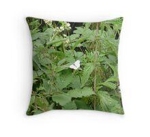 LARGE WHITE-pieris brassica. Throw Pillow