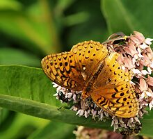Sharing the milkweed by Gaby Swanson  Photography