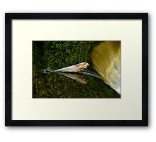 Falling Tree Reflections In River Framed Print